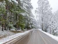 Zimní les - Krajobraz