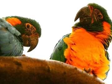 Colorful parrots - parrots parrots parrots