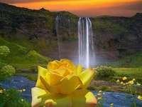paisagem com uma flor