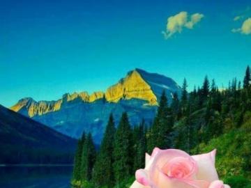 krajobrazy z kwiatami - to bardzo ładny kwiat pin dafna