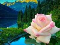 paisagens com flores
