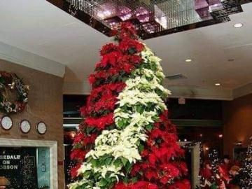Christmas tree with poinsettia flowers. - Christmas tree with poinsettia flowers.