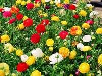 Colorful glaucoma. - Jigsaw puzzle. Flowers. Colorful glaucoma.