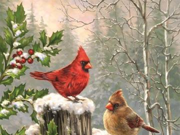 Birds: Cardinals. - Animals. Birds. Cardinals.