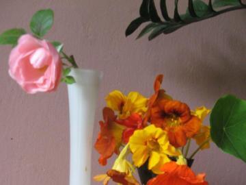 Kapuzinerkressen und eine Rose - Letzte Blüten des Herbstes. Kapuzinerkressen - Blumen, die eifrig im Jugendstil und in der Rose ver