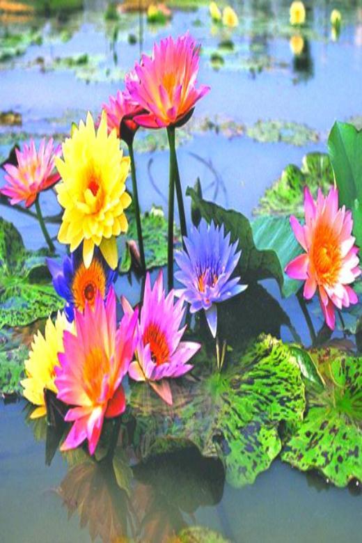 Flores na lagoa. quebra-cabeça online