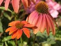 flores - flores natureza jardim