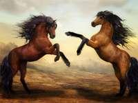 Combat à cheval
