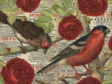 Colorful birds. - Animals. Colorful birds.