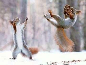 Wiewióreczki. - Squirrels in the snow.