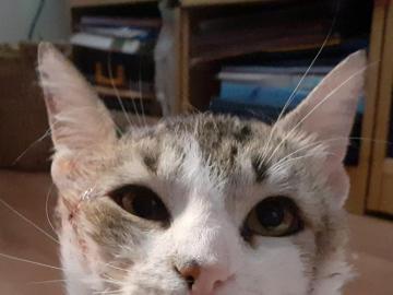 Ciccio - nasz kotek - zdjęcie kotka, kotek patrzy