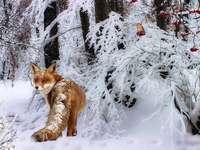 zorro pájaro bosque invierno