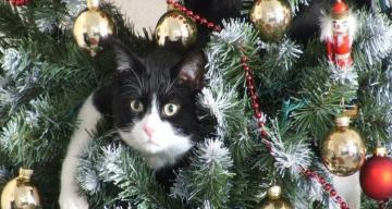 Kitten in a Christmas tree. - Jigsaw puzzle. Kitten in a Christmas tree.