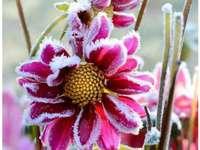 bloemen frost tuin
