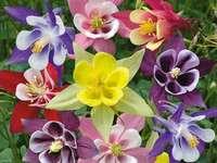 kolorowe kwiaty ogród