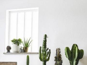 Kaktus-Sammlung - Eine schöne Reihe von Kakteen