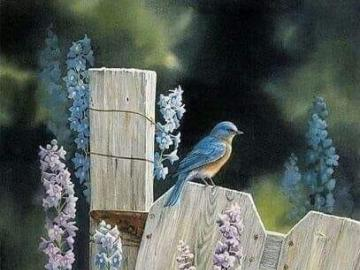 Vogel blüht Zaun - Vogel blüht Zaun