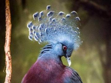 bird nature nature - bird nature nature