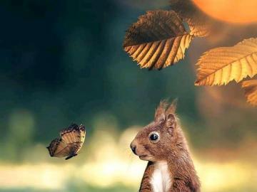 Squirrel and butterfly - Squirrel and butterfly