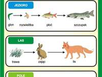 food chain - food dependence of organisms, food chain