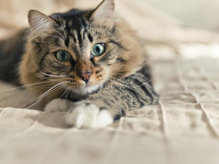 pisică frumoasă - este o pisica draguta, sper sa va placa mult (5×5)