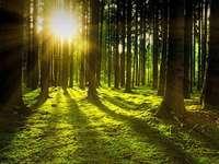 erdő a nap