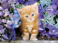 Tiny cat - Kitty among the flowers