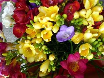 Piękne frezje. - Układanka. Kwiaty: frezje.