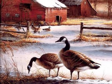 Oche selvatiche - Oche selvatiche di fronte a una famiglia rurale