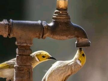 Birds faucet birds - Birds faucet bird birds