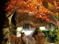 Chata koń drzewa przyroda - Chata drzewa przyroda koń