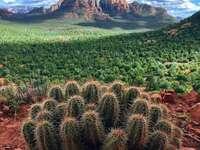 kaktusy przyroda natura - kaktusy przyroda natura