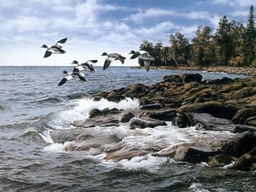 Al lago - Volo di anatre selvatiche sul lago