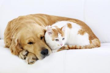 cat and dog - A pair of friends cuddling up to each other