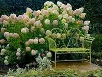 Bouquet di ortensie.