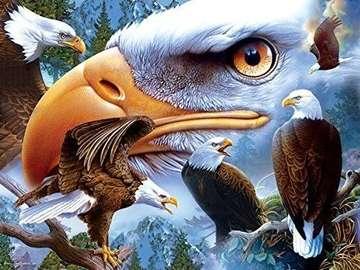 Bird. Eagle.