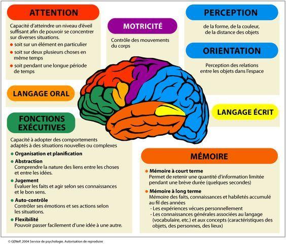 мозък - Мозък и функциониране (15×15)