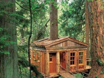 Treehouse - A house hanging on a tree surrounded by a dense forest