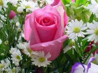Rose  - Flori cd. Trandafir. Roz și alb în această grădină.