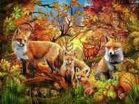 Foxes in the fall.