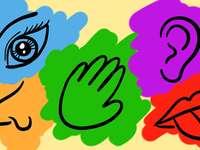 cinci simțuri