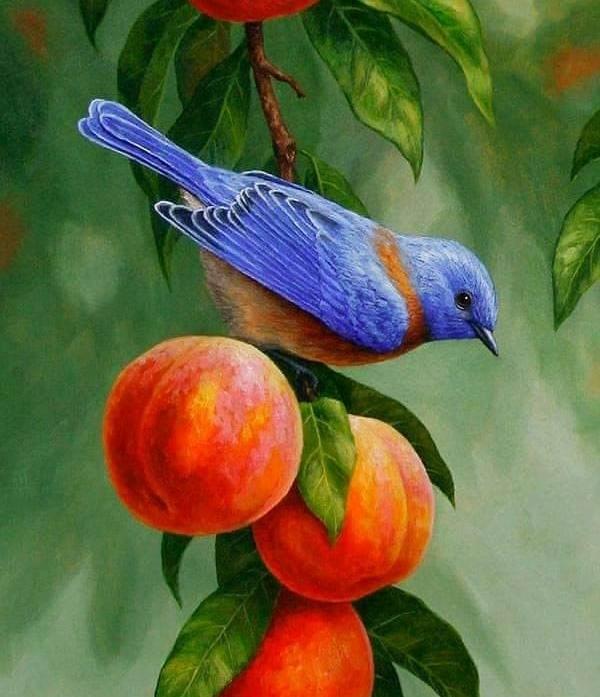 En fågel som vilar på ett fruktträd