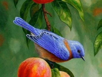 Ein Vogel ruht auf einem Obstbaum - Ein Vogel ruht auf einem Obstbaum