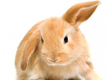 sweet little bunny - sweet bunny. 99 items