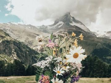 Bukiet polnych kwiatów - Polne kwiaty na tle gór