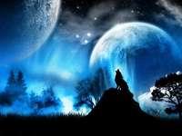 красив вълк през нощта