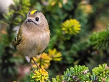 Birdie in Blumen - Niemand liest die Beschreibungen, also werde ich nicht produzieren, wofür?