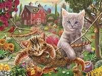 Kittens op een hangmat.