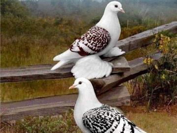 Three beautiful birds - Three beautiful birds Three beautiful birds