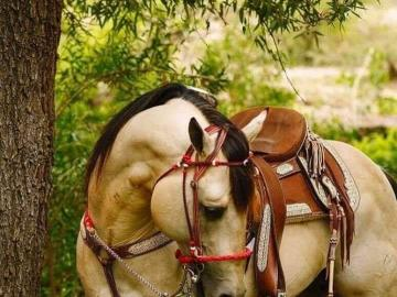 A beautiful horse under the tree - A beautiful horse under the tree